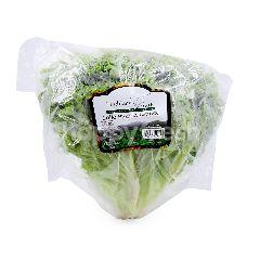 HIGHLAND FRESH Lollo Bionda Lettuce