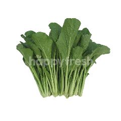 Daily Fresh Vegetables Cameron Mustard (Sawi)