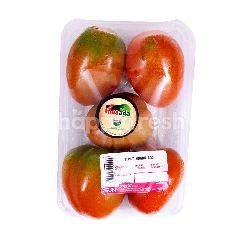 Masada Tomat Organik