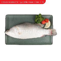 บิ๊กซี ปลากะพง ขาว