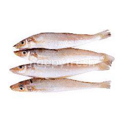 Ikan Kaca Piring