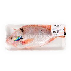 บิ๊กซี ปลาทับทิม