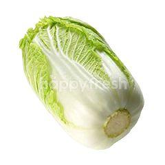 Grade Premium Chinese Cabbage