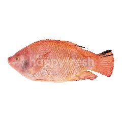 Tesco Tab Tim Fish