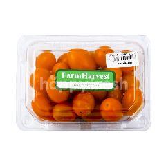 Farm Harvest Tomat Ceri Kuning