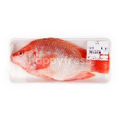บิ๊กซี ปลาทับทิมตัว