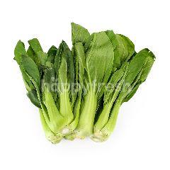 AGAPE ORGANIC Small White Vegetable