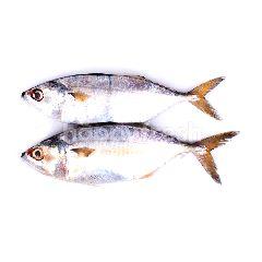 Ikan Kembung Puket