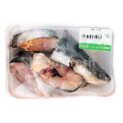 Ikan Patin Hidup