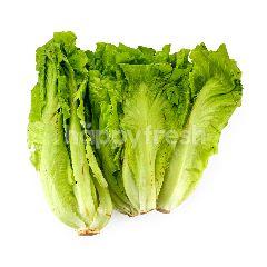 AGAPE ORGANIC U.S Lettuce
