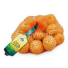 First Pick Australia Cocktail Potato