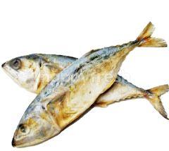 Salted Mackerel (Ikan Kembung Masin)