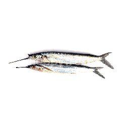Ikan Kacang-kacang