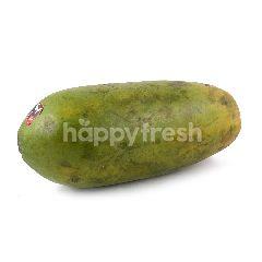 Jempol California Papaya