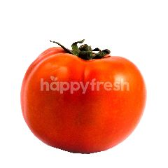 Tomat Beef Besar