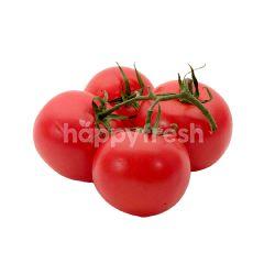 Tomato (4 Pieces)