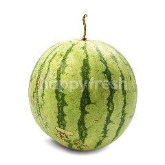 Semangka Kuning Tanpa Biji