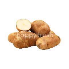 US Russet Potato