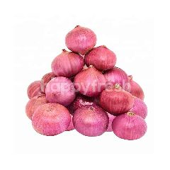 Giant Red Big Onion
