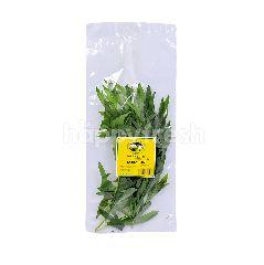 GENTING GARDEN Premium Quality Fresh Herbs Italian Tarragon