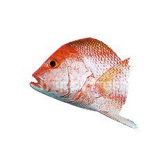 Red Snapper (Jenahak) Head