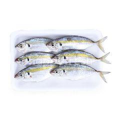 Ikan Selar NS