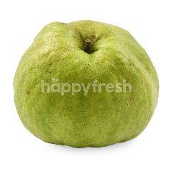 Sunpride   Crystal Seedless Guava