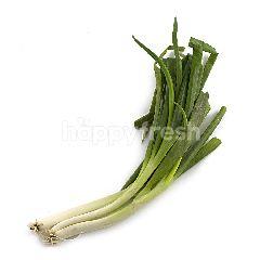 MAISON'S Spring Onion