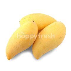 Chokanan Mango