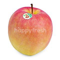 Apel Mutshu Jepang