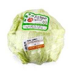 Agape Organic AGAPE ORGANIC Organic Cabbage