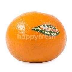 Mandarin Kinno Orange