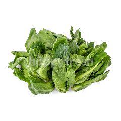 Agape Organic AGAPE ORGANIC Organic Cabbage Shoot