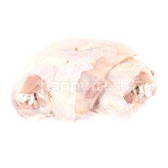 Dada Ayam Kampung Tanpa Sayap