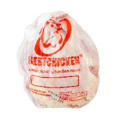 Ayam Broiler Beku