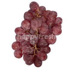 Anggur Red Globe Australia
