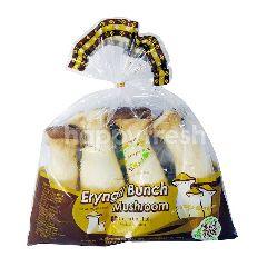WHIM ORI Eryngii Bunch Mushroom