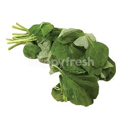 Eco Harvest Green Spinach