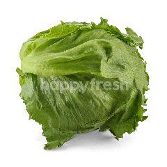 LUSHIOUS Iceberg Lettuce