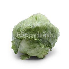 Genting Garden Iceberg Lettuce