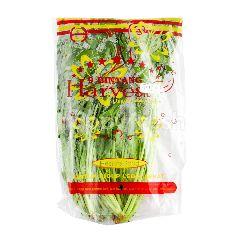 9 Bintang Harvest Horenso