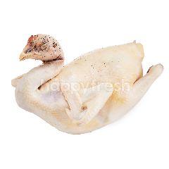 กูร์เมต์ มาร์เก็ต ไก่พื้นเมืองต้ม (ไก่ประดู่หางดำต้ม)