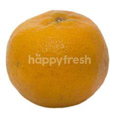 Jeruk Keprok Mandarin Murcot