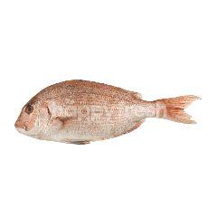 ปลามะได