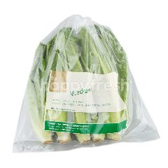 Royal Project Cos Romaine Lettuce