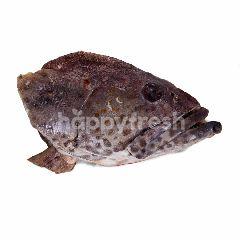 Kepala Ikan Kerapu