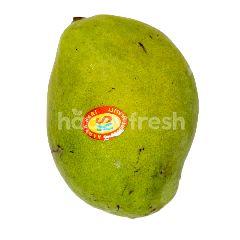 Mangga Indramayu