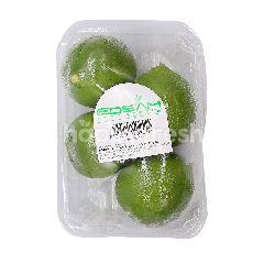 Edsam Lime