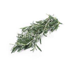 Lushious Rosemary