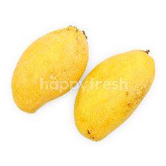 Mango Susu